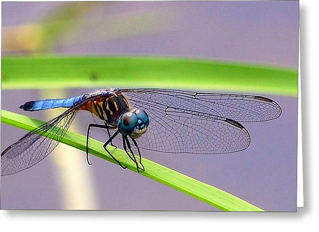 Balancing Act Greeting Card by Robin Pross