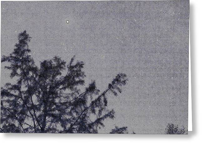 Bald Cypress And Stars. Greeting Card