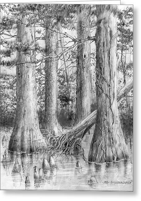 Bald cypress coloring pages ~ Bald Cypress Enhanced Drawing by Jim Hubbard