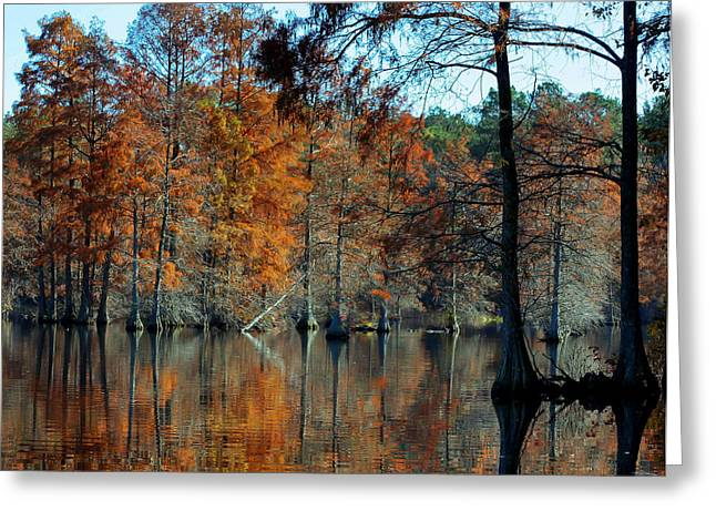 Bald Cypress In Autumn Greeting Card