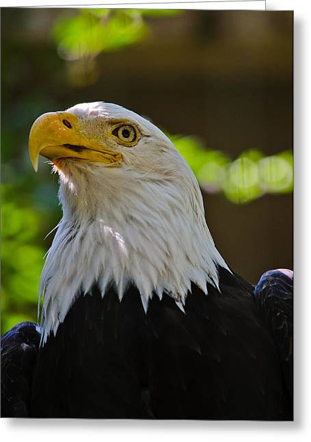 Greeting Card Featuring The Photograph Bald Eagle By Alex Rios