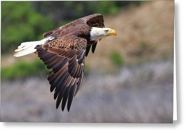 Bald Eagle Greeting Card by Beth Sargent