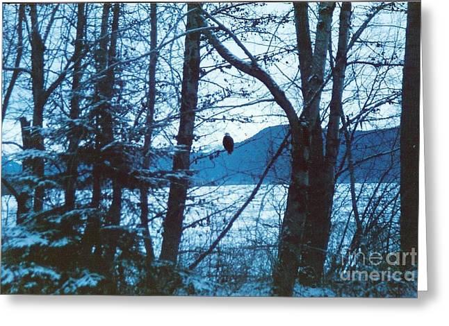 Bald Eagle Haines Alaska Greeting Card by Judyann Matthews