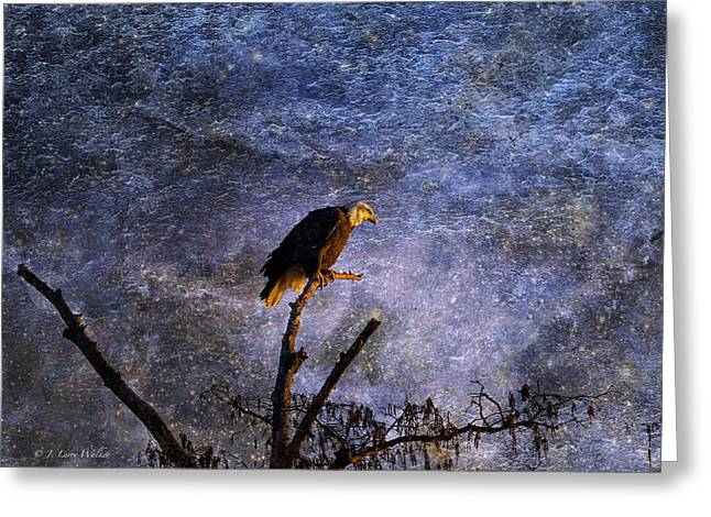 Bald Eagle In Suspense Greeting Card