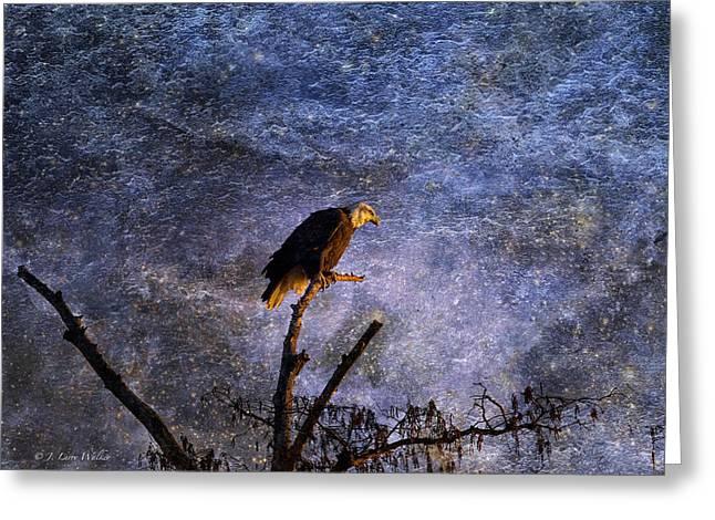 Bald Eagle In Suspense Greeting Card by J Larry Walker
