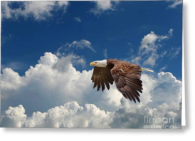 Bald Eagle In The Clouds Greeting Card by Dale Erickson