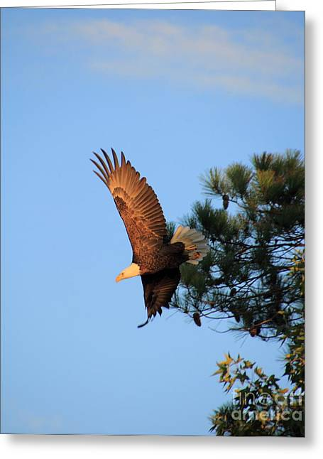 Bald Eagle Liftoff Greeting Card