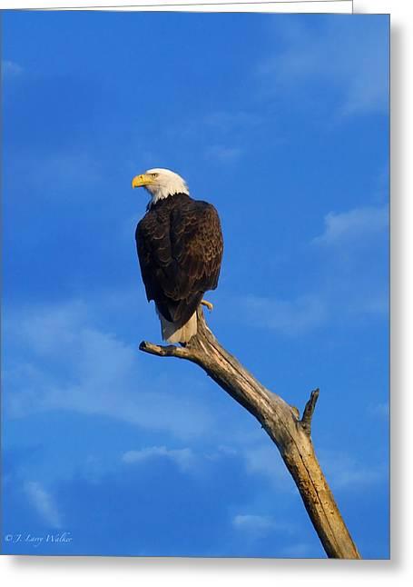 Bald Eagle Sitting High Greeting Card by J Larry Walker