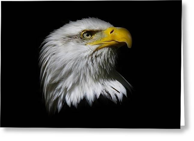 Bald Eagle Greeting Card by Steve McKinzie
