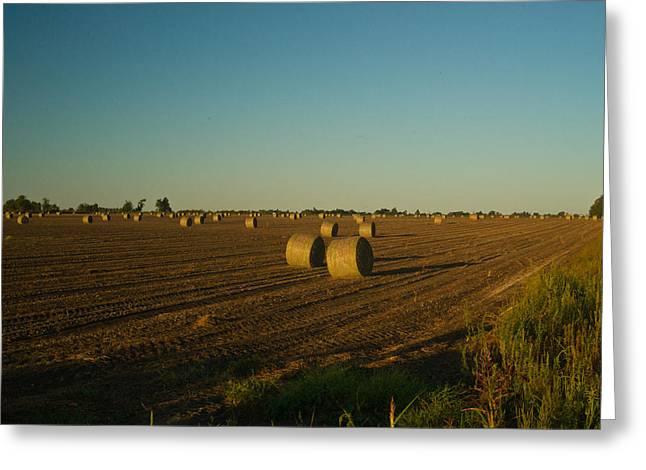 Bales In Peanut Field 13 Greeting Card by Douglas Barnett