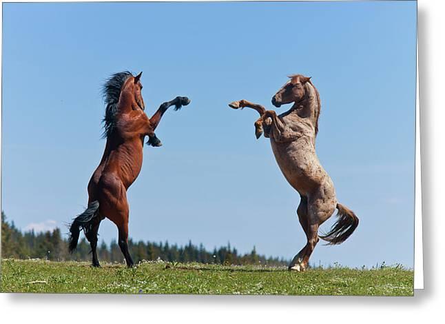 Balttling Stallions Greeting Card