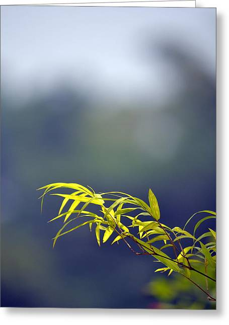 Bamboo Blue Greeting Card by Ku Azhar Ku Saud