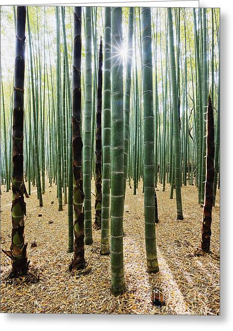 Bamboo Forest Greeting Card by Jeremy Woodhouse