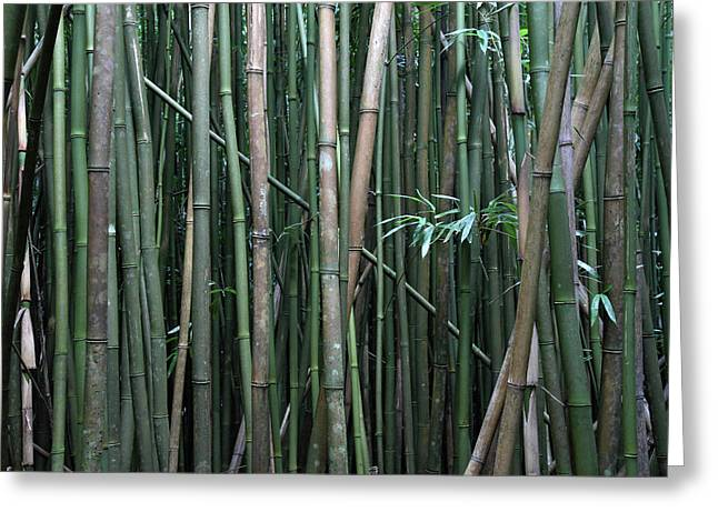 Bamboo Forest Greeting Card by Pierre Leclerc Photography
