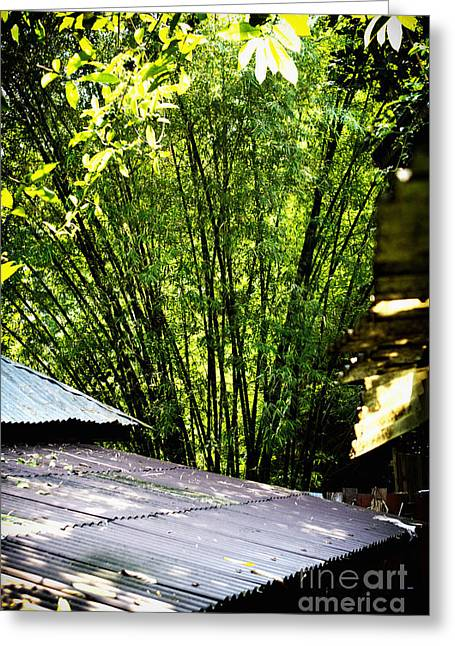 Greeting Card featuring the photograph Bamboo Shade by Thanh Tran