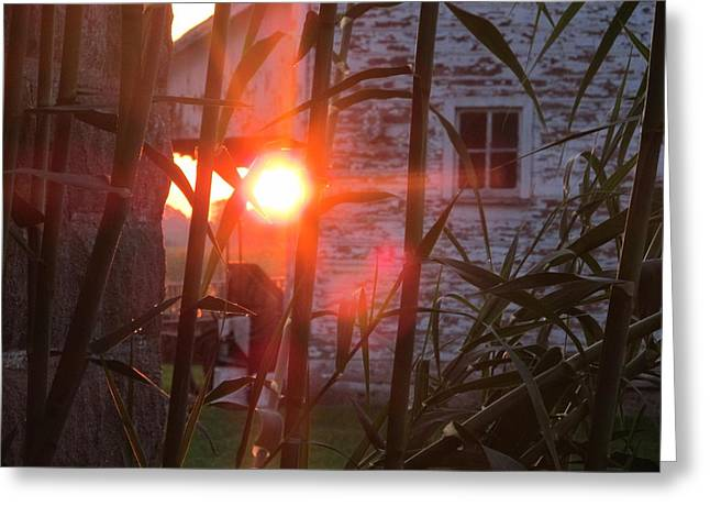 Greeting Card featuring the photograph Bamboo Sunrise by Tina M Wenger