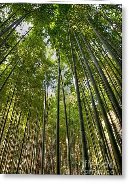 Bamboo Greeting Card by Tad Kanazaki