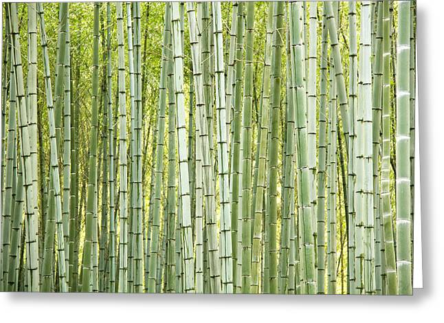 Bamboo Trees Background Greeting Card by Vaidas Bucys