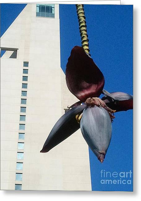 Greeting Card featuring the photograph Banana Flower In The City by Jasna Gopic
