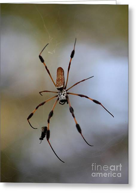 Banana Spider With Prey Greeting Card by Carol Groenen