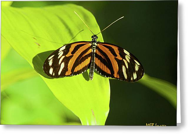 Banded Orange Butterfly Greeting Card by  Margaret Buchanan
