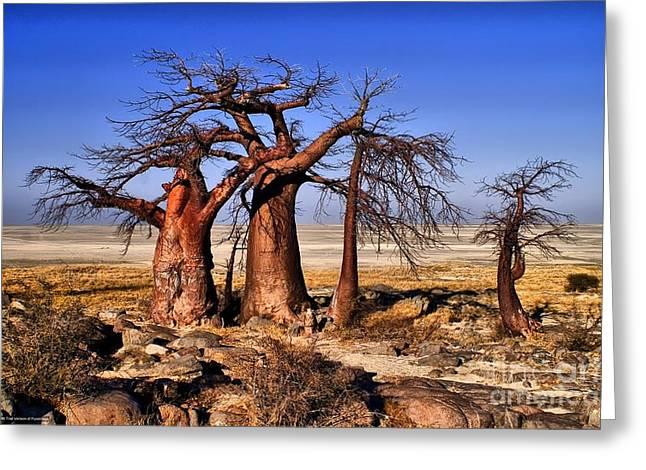 Baobabs At Kubu Greeting Card