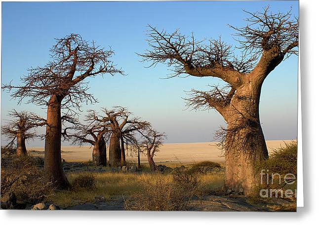 Baobabs Of Makgadikgadi Greeting Card