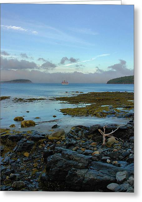 Bar Harbor Evening Greeting Card by Stephen  Vecchiotti