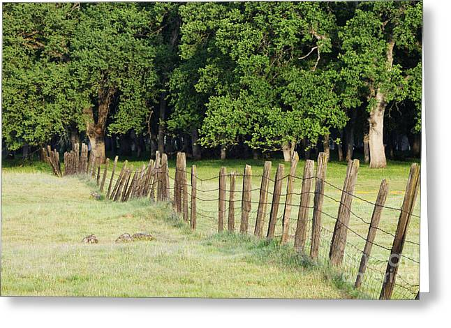 Barbed Wire Fence In Disrepair Separating Fields Greeting Card