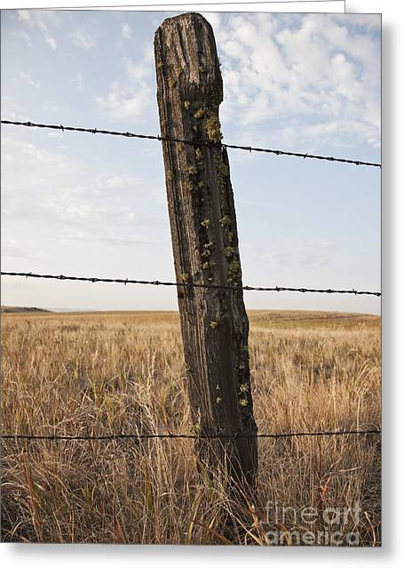 Barbed Wire Fencing And Wooden Post Greeting Card by Jetta Productions, Inc