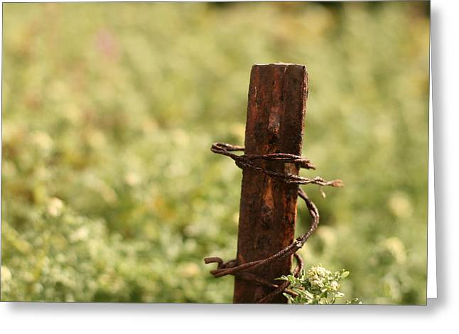 Barbed Wire Green Greeting Card