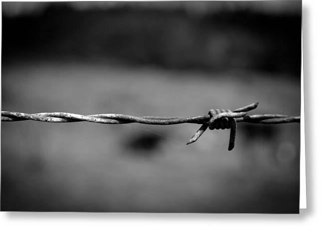 Barbed Wire Greeting Card by Raimonds Raginskis