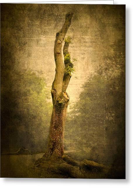 Bare Tree Greeting Card by Svetlana Sewell