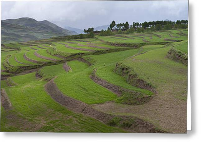 Barley Crop Grown On Terraced Hillsides Greeting Card by Phil Borges