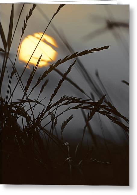 Barley Sunrise Greeting Card by Nigel Forster