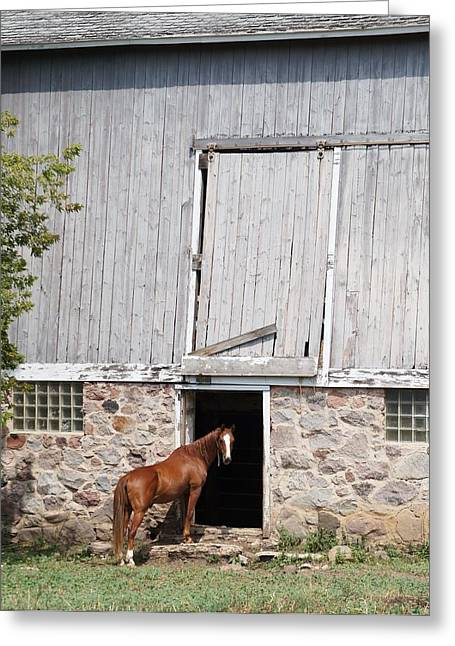 Greeting Card featuring the photograph Barn And Horse by Kristine Bogdanovich