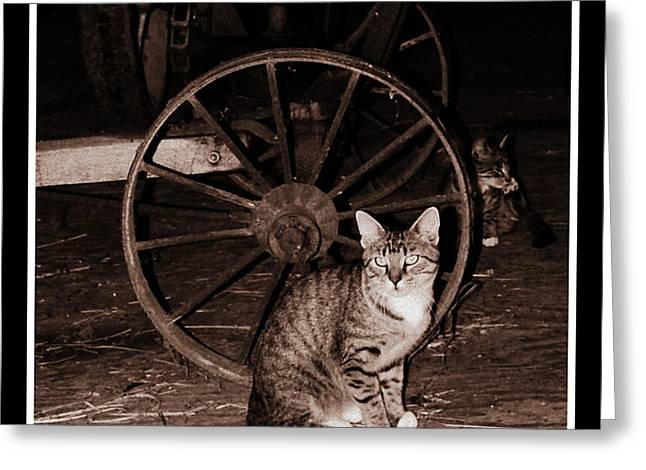 Barn Cat Greeting Card
