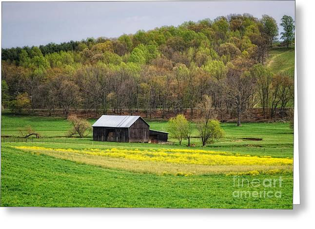 Barn In The Hollar Greeting Card by Pamela Baker