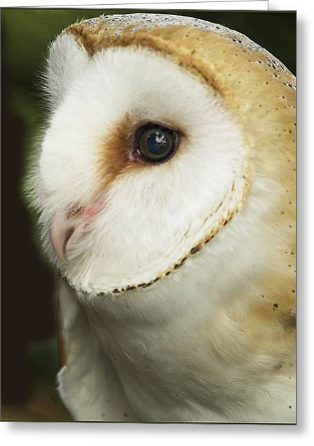Barn Owl Close-up Greeting Card