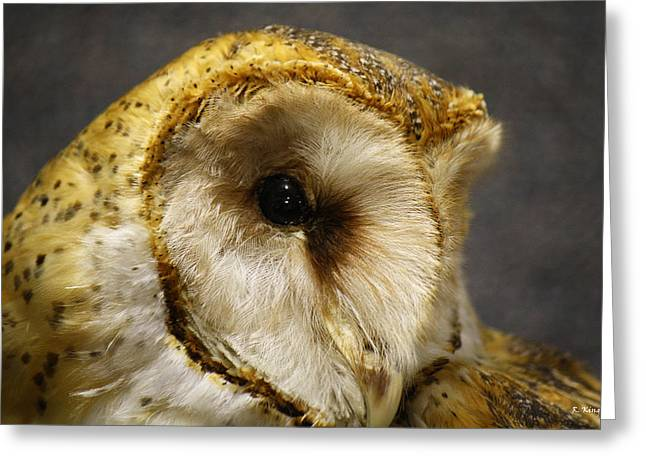 Barn Owl Portrait Greeting Card