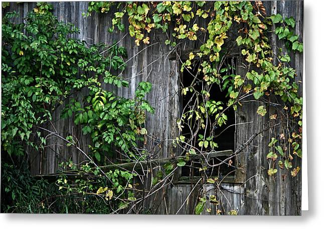 Barn Window Vine Greeting Card