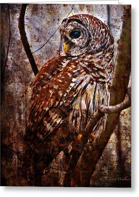 Barred Owl In Hiding Greeting Card by J Larry Walker