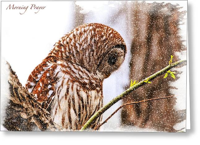 Barred Owl In Morning Prayer Greeting Card by J Larry Walker