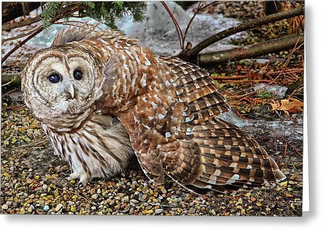 Barred Owl Warning Greeting Card