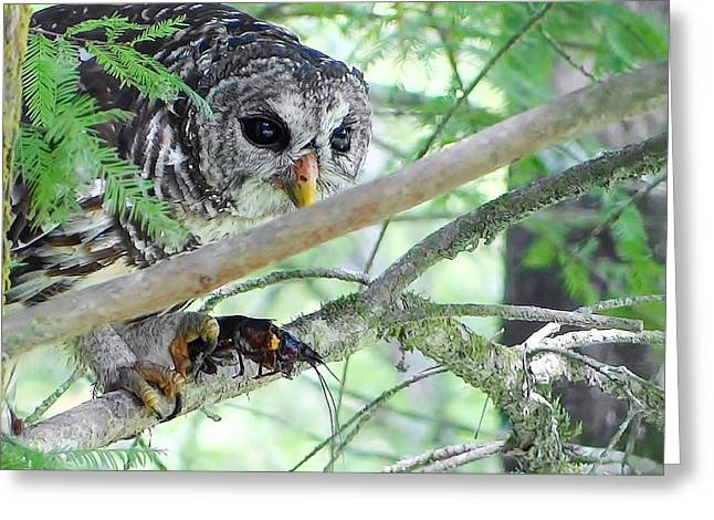 Barred Owl With Crawfish Greeting Card by Betty Berard