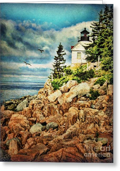 Bass Harbor - Acadia Np Greeting Card by Lianne Schneider