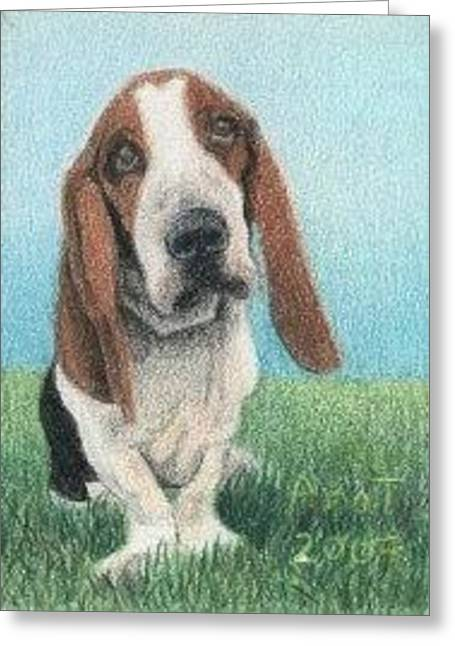 Basset Hound - Aceo Greeting Card