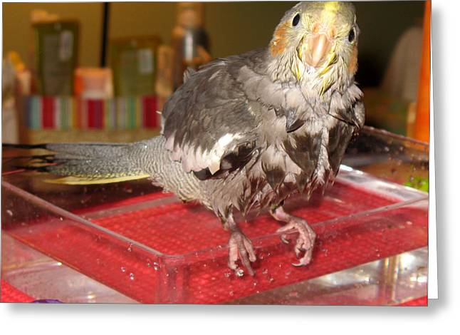 Greeting Card featuring the photograph Bath Night For Birdies by Kimberly Mackowski