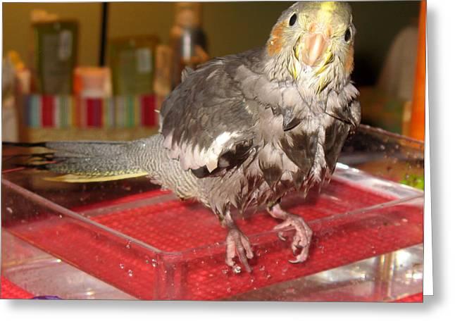 Bath Night For Birdies Greeting Card