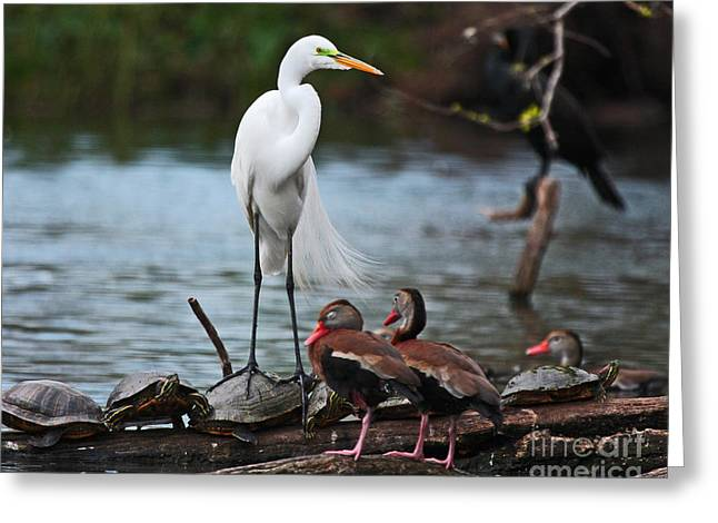 Greeting Card featuring the photograph Bayou Friends by Luana K Perez